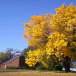 Fall 2012 - What Beautiful Tree We Had at Beloit Church!