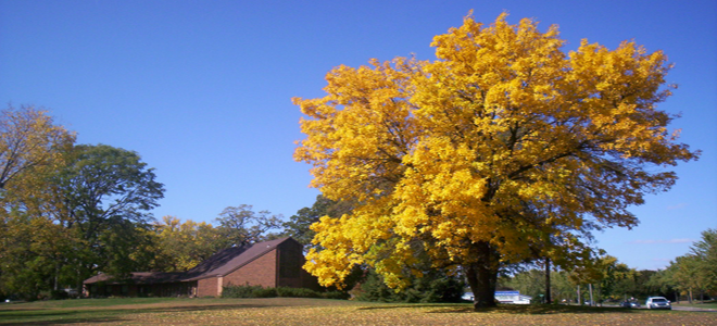 Fall 2012 – What Beautiful Tree We Had at Beloit Church!